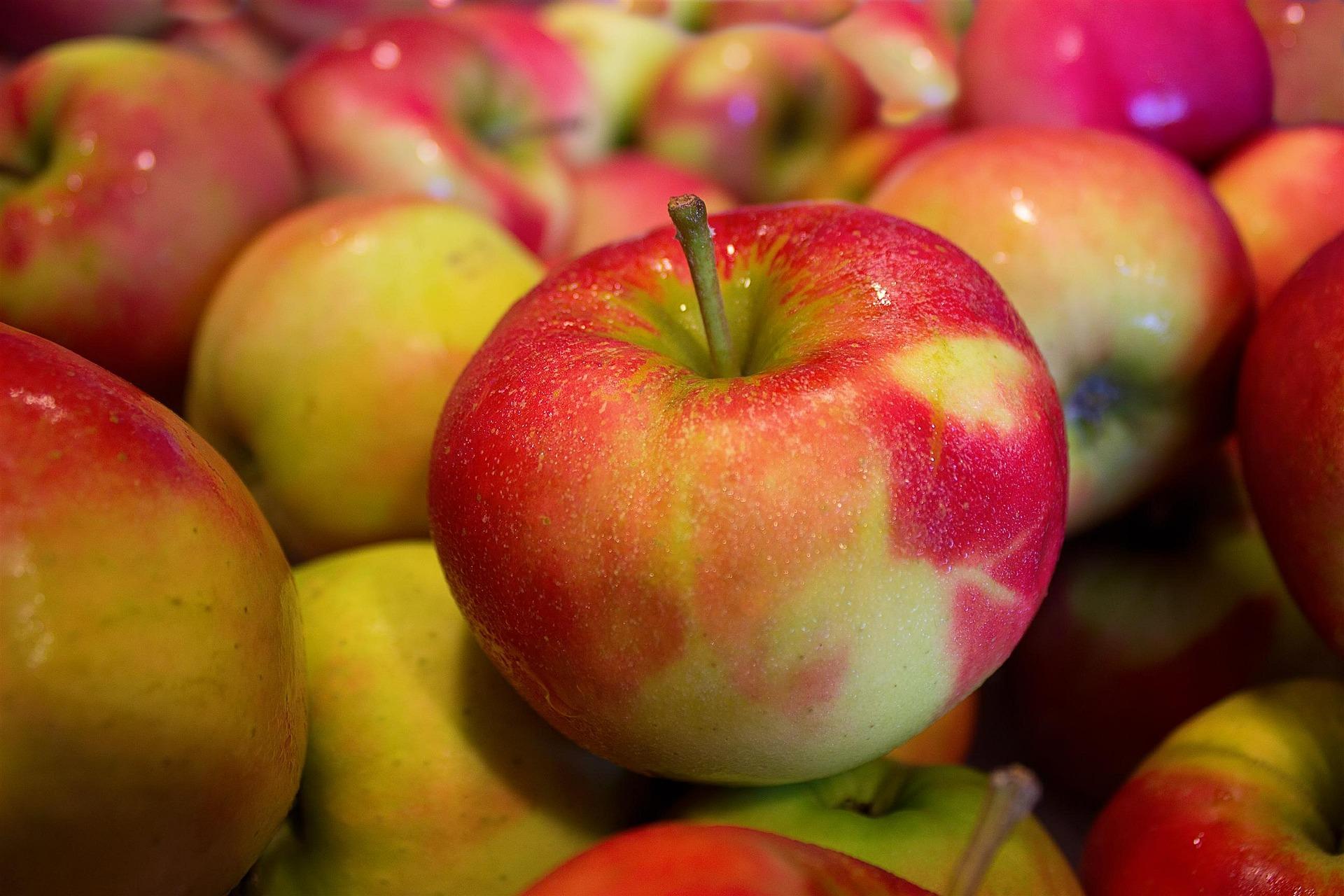 Frugtordning